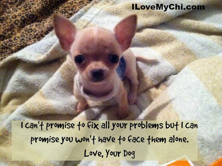 20 Chihuahua Memes That will Make You Cry | Cute chihuahua ...
