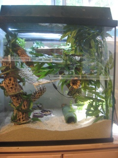 This is exactly what I'd want Kaydens tank to look like. Live bamboo and all. Love this.