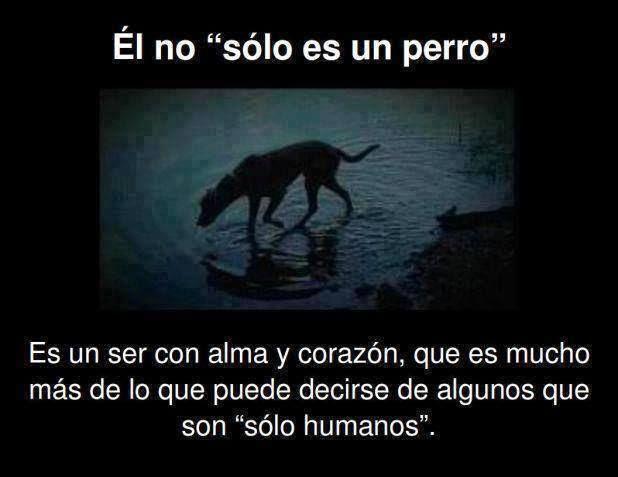 Ellos no son sólo un perro, son seres vivos que sienten, sufren igual que nosotros. ¡Si ves que te necesitan ayúdalos!