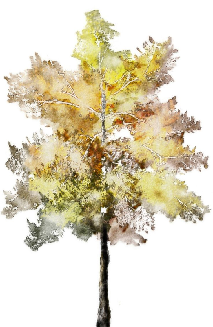Watercolor-Trees_013.jpg (1158×1781)