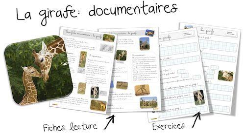 La girafe : Fiche documentaire et les exercices : | Bout de Gomme