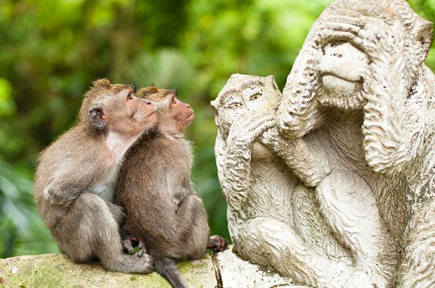Sacred Monkey Forest, Ubud | Bali | Top-Rated Tourist Attractions in Indonesia | Ubud is the cultural heart of Bali, and it's here you'll find the Sacred Monkey Forest, a serene space where you can feel the ancient majesty of the island. At this Hindu temple, you'll see many long-tailed macaques, a species of monkey commonly seen throughout SoutheastAsia.