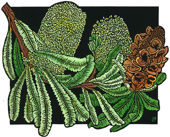 Old Man Banksia Design - Limited Edition Handpainted Linocuts by Lynette Weir