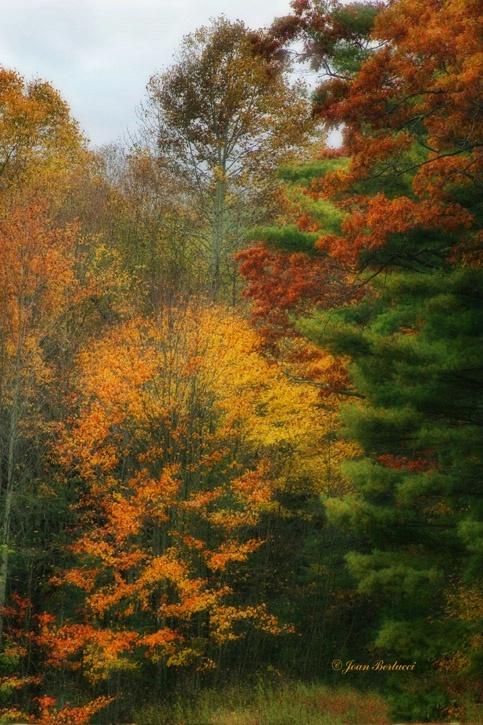 Burst of Autumn, Virginia