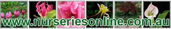 Wholesale Nurseries : Wholesale plants and nursery in Australia