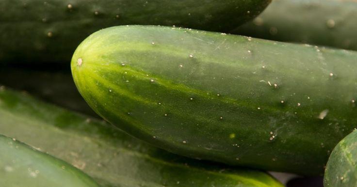 Cómo eliminar el amargor del pepino . Lo amargo del pepino suele concentrarse en el tallo final de la fruta. Puede ser consecuencia de la temperatura, fertilización, el espacio de la planta o la irrigación. También puedes notar más el sabor amargo en el pepino pelado y en las áreas verdes debajo de la piel. Lo amargo raramente reside en la profundidad del pepino. Un pepino amargo ...