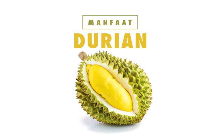 Durian tidak hanya lezat namun ternyata memiliki banyak manfaat bagi tubuh anda. Jika anda ingin menaikkan berat badan dan menghilangkan insomnia, cobalah konsumsi durian. Cek manfaat-manfaat durian di #iShapeBlog hari ini!