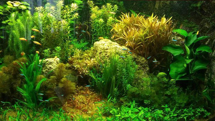 Een prachtig beplant hoek aquarium. Dit is een Juwel Trigon 350 hoek aquarium.