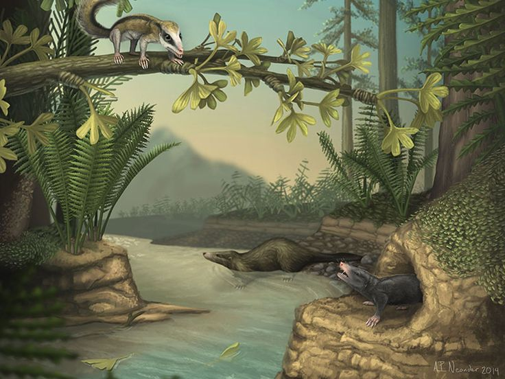 Found: Two sophisticated mammals that thrived during the age of the dinosaurs: Early mammals had a surprisingly wide range of adaptations, ranging from the tree-climbing Agilodocodon (top) to the swimming Castorocauda (in the water) and the burrowing Docofossor (bottom).