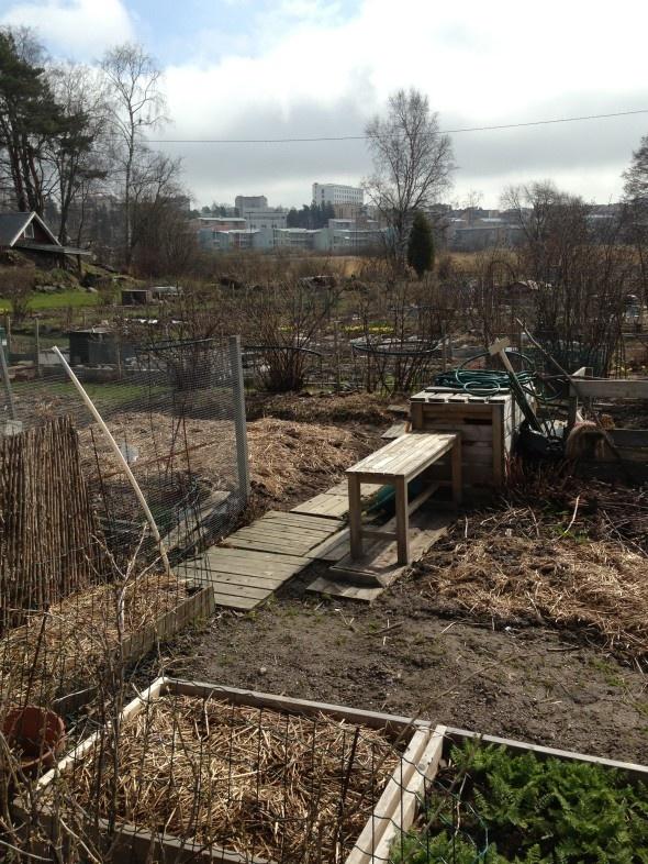 May 5, 2013. #Urban garden allotment in Helsinki, Finland. City skyline. Spring is late in Helsinki, it's all still very brown.