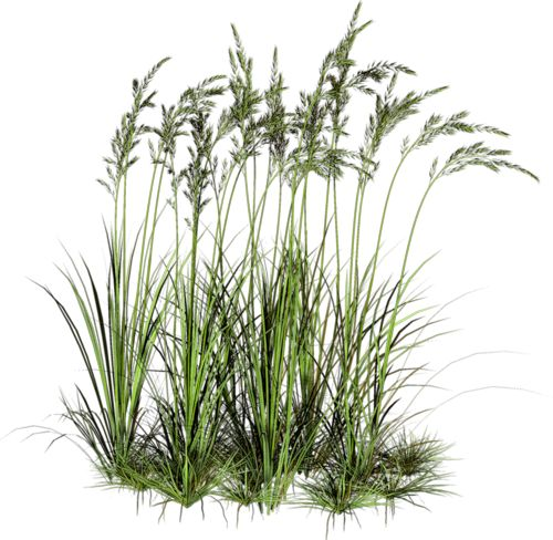 665 best photoshop library images on pinterest plants for Pond grass plants