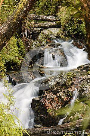 Cascada En El Bosque - Descarga De Over 35 Millones de fotos de alta calidad e imágenes Vectores% ee%. Inscríbete GRATIS hoy. Imagen: 30165248