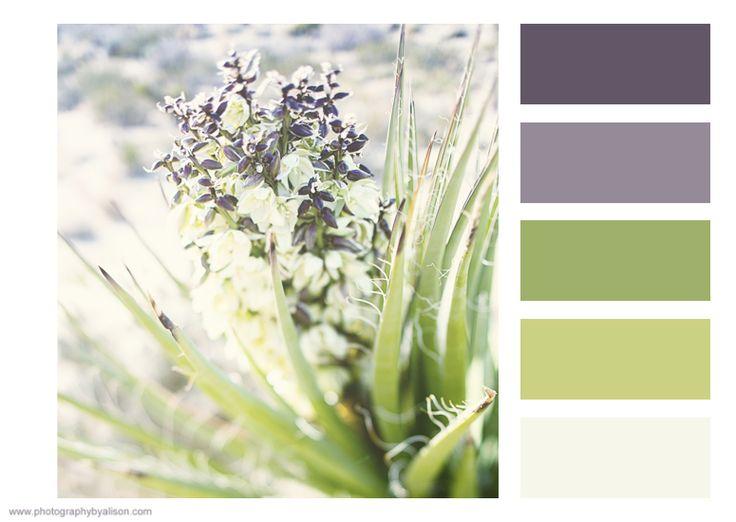 Color Palette Creator #photographybyalison #colorpalette #colors #joshuatree