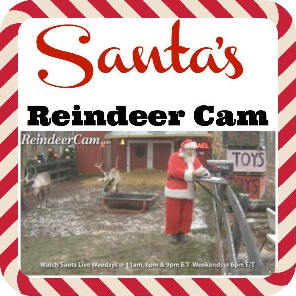 Watch Santa And His Reindeer On The Reindeer Cam!