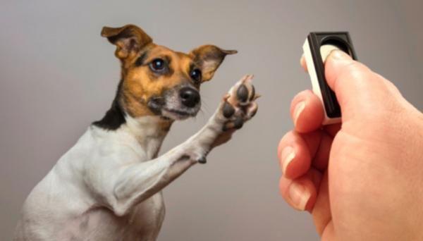 Clicker para perros - Todo lo que debes saber de él. ¿Cuántas veces habrás deseado poder decirle a tu mascota: