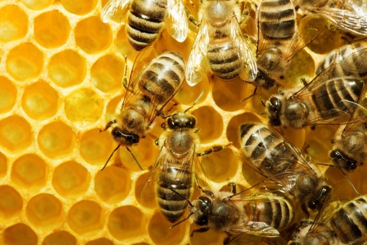 What do bees do in the winter? How much honey does a bee need to store to get through the winter? Watch and listen to learn.
