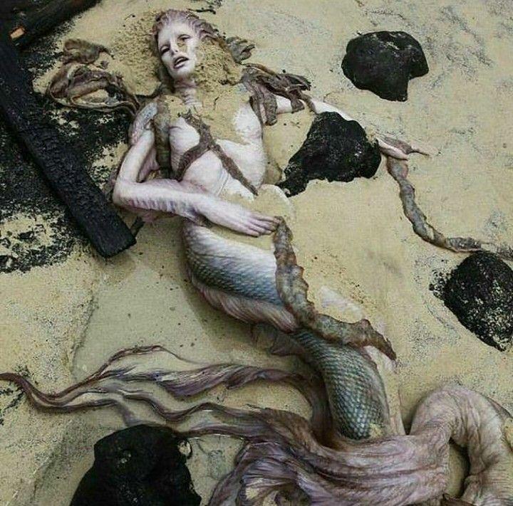 Es una rareza encontrar especies  mitológicas como la sirena pero no será una realidad hasta que no se capture una sirena viva, hasta entonces se creerá en su existencia, mientras seguiran siendo tan solo un mito.