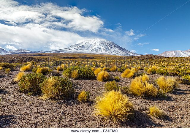 last vegetation zone volcanoes - Volcano Lascar, Chile.  Stock Photos & Volcano Lascar Stock Images - Alamy