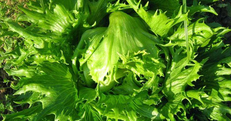 Σπορά λαχανικών για καλύτερη φυτρωτικότητα των σπόρων