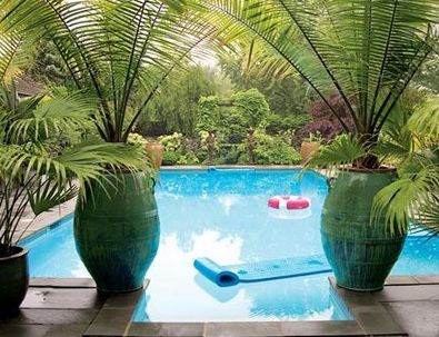 17 Best Images About Potted Trees On Pinterest Gardens Spring Plants And Tropical Backyard