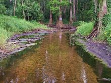 The Peace River is a river in the southwestern part of the Florida peninsula. It originates at the juncture of Saddle Creek and Peace Creek northeast of Bartow in Polk County and flows south through Hardee County to Arcadia in DeSoto County and then southwest into the Charlotte Harbor estuary at Port Charlotte in Charlotte County. It is 106 miles (171km) long and has a drainage basin of 1,367 square miles. Highway 17 runs near and somewhat parallel to the river for much of its course.