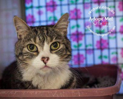 gumtree pls see renbury.com.au save a dog cat kitten Australia NSW Sydney area pets in pound