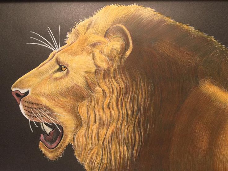 Lion By Tina Lee Coloring BookLion
