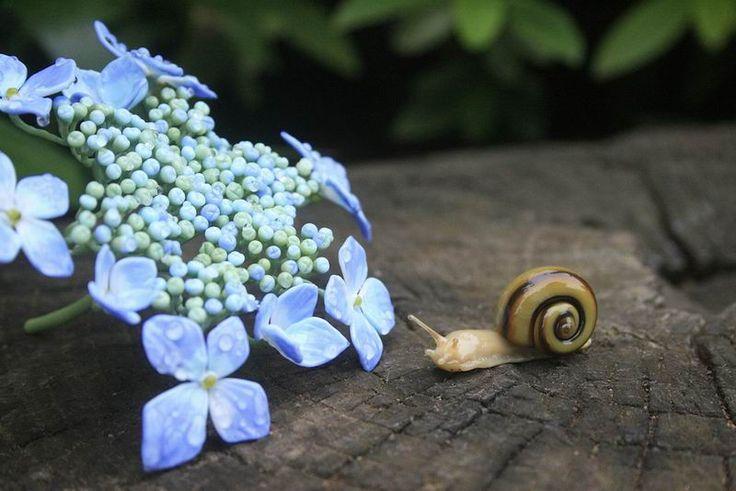 Keren! Seniman Jepang Ciptakan Patung Serangga dan Tanaman Dari Kaca!