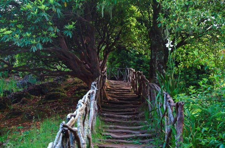 Neem wat lekkers mee voor onderweg en ga touren met de auto. Je komt langs de hoogste bergtoppen, de groenste dalen en kleurrijkste bloemenzeeën. Halverwege de rit moet er uiteraard even gestopt worden voor een typisch Portugese lunch. Je vervolgt de route langs watervalletjes, bergkliffen en het 'magische' Laurissilva woud. Tijdens de vakantie verblijf je in ambiance accommodaties zoals quinta's en oude herenhuizen. Beleef de romantiek op Madeira!