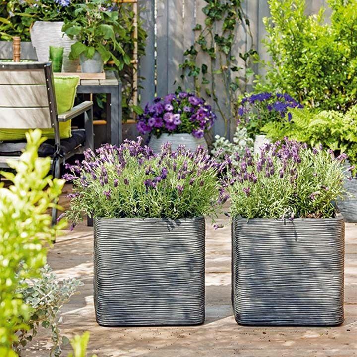 Heerlijk de geur van lavendel. Zet lavendel op je terras in mooie betonlook…