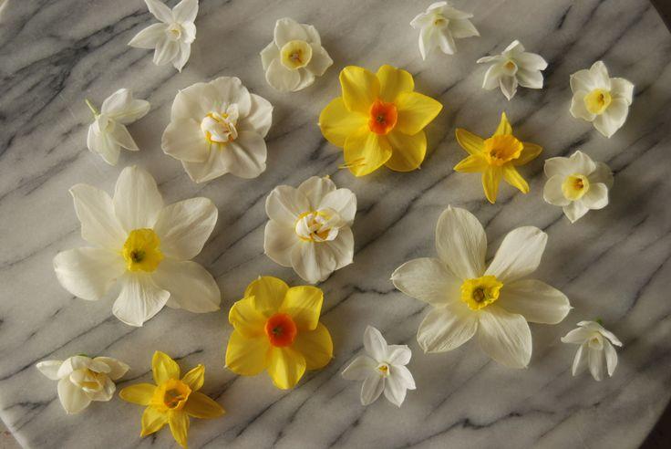 spring / garden