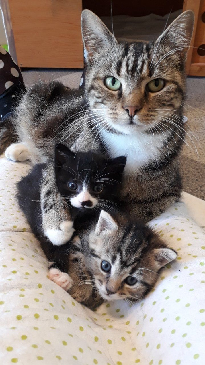 Family Photo There S Always One That Isn T Quite Ready And Looks Surprised Crosspost From Aww In 2020 Cute Cats Cute Animals Beautiful Cats