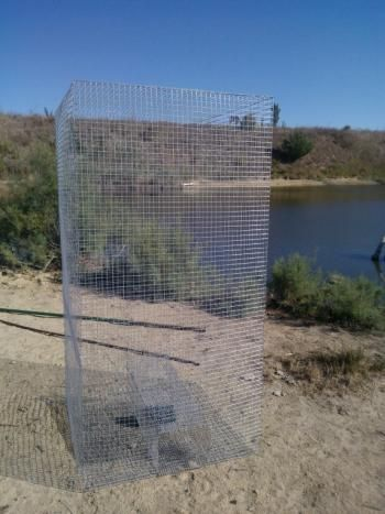 La cage-piège : une invention prometteuse contre les tortues de Floride…