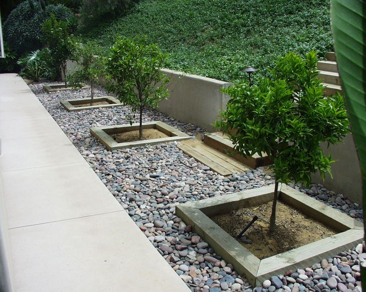 Rock ground covering images by creating tree boxes for Low maintenance ground cover ideas