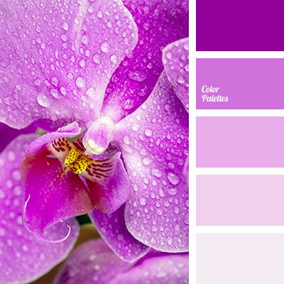 Dusty Pink Color Combination Color Of Fuchsia Gentle