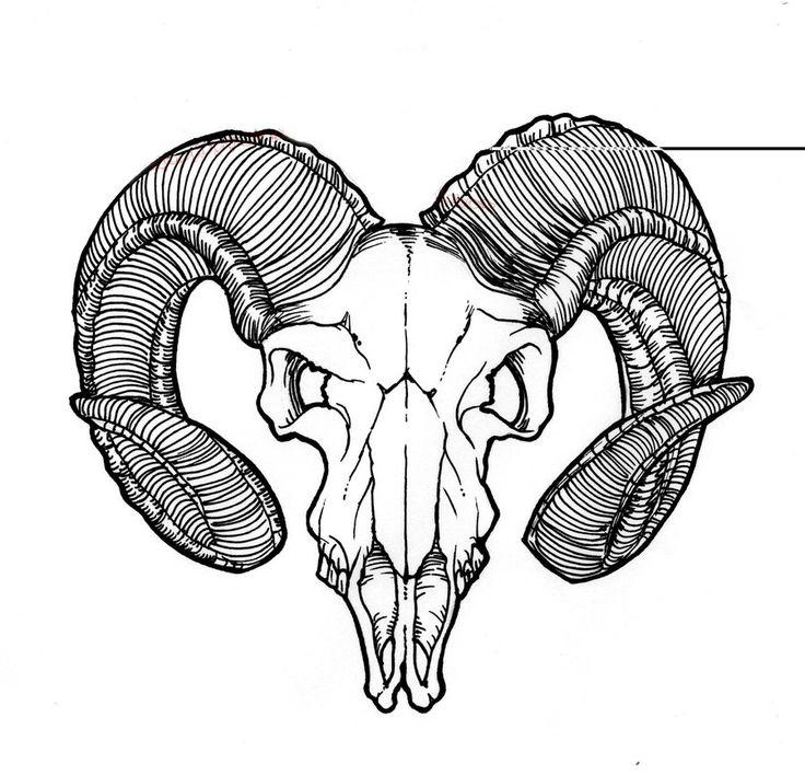 череп барана фото