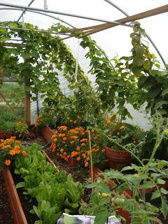 Poly Tunnel Growing