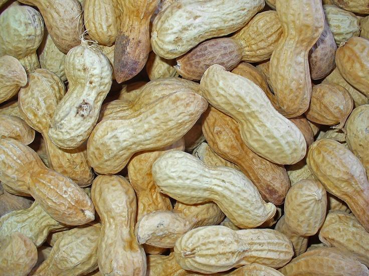 Raising a Child with Peanut Allergies: Peanut Allergies are on the Rise!