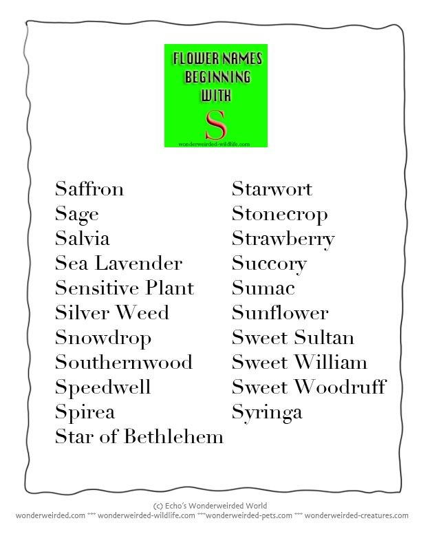Flower Names beginning with S, List of Common Flowers beginning with S for our Flower Dictionary, Entry S in our A to Z o Dictionary of Common Flower Names, with an easy to print Flower Poster