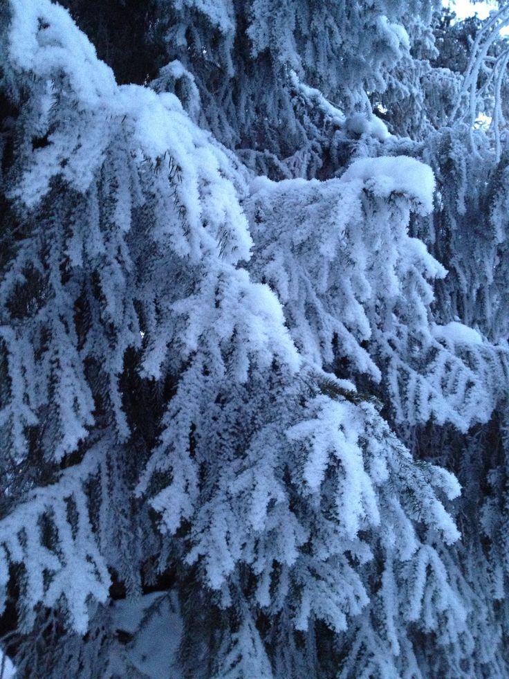 Koiteli talven lumossa <3