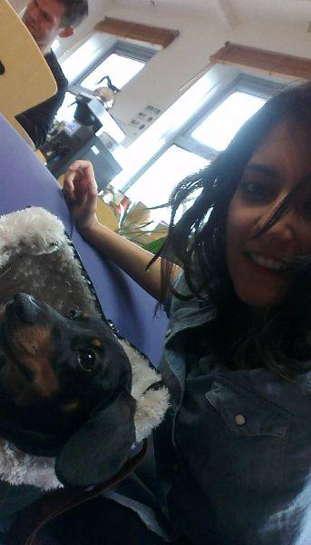 Peggy teaching Kat how to optimise #Dachshund #OfficeDog
