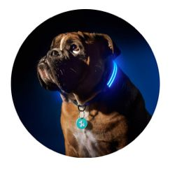 Dog Collars that Combine Style with Safety... http://www.australianwomenonline.com/dog-collars-that-combine-style-with-safety/
