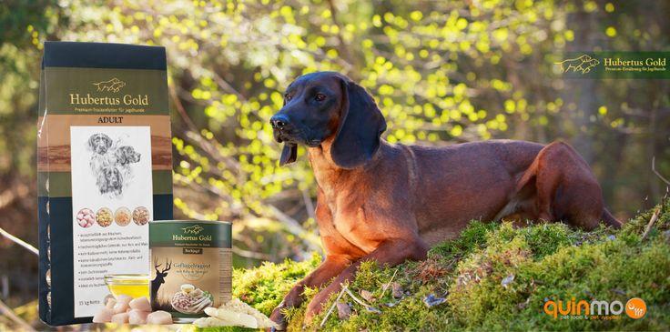 Bestel 1 zak Hubertus Gold premium hondenvoer naar keuze en 1 Hubertus Gold blikmenu naar keuze en profiteer van verzendkosten vrije zending!!  #honden, #hondenvoer, #Apeldoorn, #Gelderland, #jachthond, #Deventer,