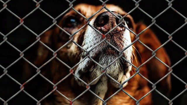 Globalen - Nyheder om dyrevelfærd, klima og miljø