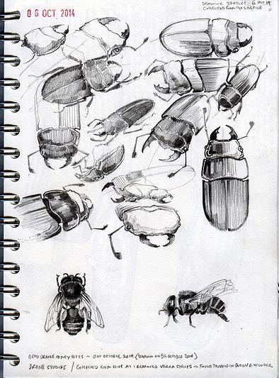 Duncan Cameron Artist | Sketchbooks