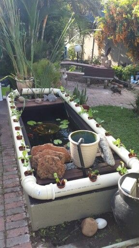 Hydroponics and koi pond