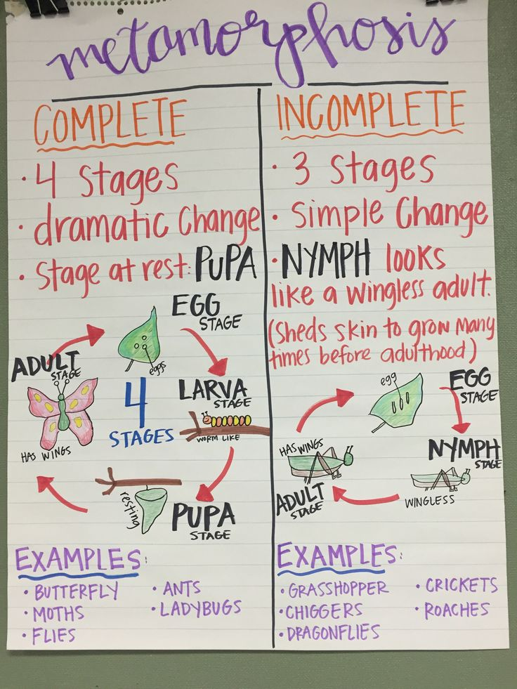 141 best images about science anchor charts on pinterest