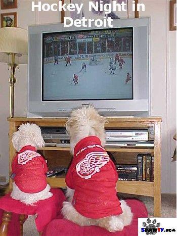 Detroit Red Wings dogs (spawties)