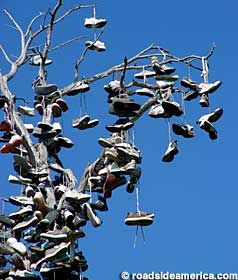 San Diego - Balboa Park shoe tree.  It shall live on as long as the tree doesn't die or get attacked by shoe tree murderers.