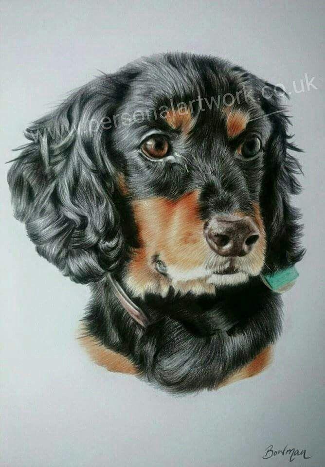 Spaniel in coloured pencil Dog portrait by Katie Bowman www.personalartwork.co.uk